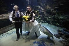 He's a turtle maniac: Giant of the seas takes exception to an underwater wedding The giant green sea turtle was unimpressed as the bride and groom made their Crazy Wedding, Dream Wedding, Wedding Dress, Underwater Wedding, Aquarium Wedding, Nontraditional Wedding, Unusual Things, Ocean Themes, Tree Frogs