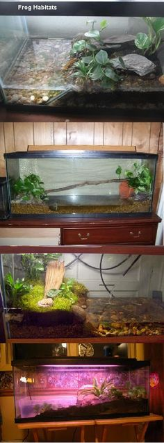frog habitat in aquarium...terrarium? I would love to put this together for a frog or I wonder if this would work for some type of small turtle!