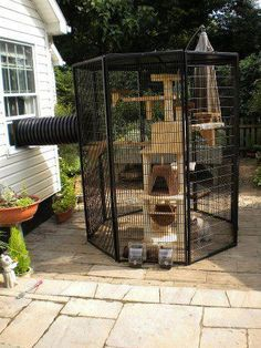 Catrageous Ways Your Cat Can Enjoy The Outdoors Safely Freedom for indoor cats or protection / safe house for outdoor cats.Freedom for indoor cats or protection / safe house for outdoor cats. Cage Chat, Diy Jouet Pour Chat, Outdoor Cat Enclosure, Diy Cat Enclosure, Pet Enclosures, Rabbit Enclosure, Diy Cat Toys, Cat Playground, Outdoor Playground