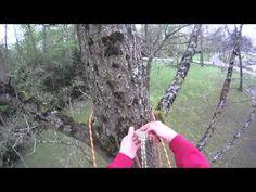 Basic climbing techniques: Basic tree ascent - YouTube
