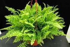 Te contamos cómo conseguir potenciar tu energía positiva y decorar tu casa con estas plantas gracia a MUJER CHIC.