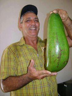Avocado, / Aguacate