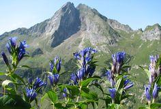 Die Höfats trennt mit Ihren 2.259 m zusammen mit dem Raueck und weiteren kleinen Gipfeln das Oytal vom Dietersbachtal. Die Höfats ist für ihren Blumenreichtum weit über das Allgäu hinaus bekannt.