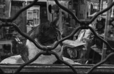 Cat by Costis Koufogeorgas