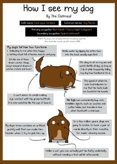 How I see my dog VS how my dog sees me.  Spot on and hilarious!!
