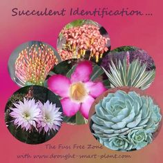 Succulents can be described in so many ways - the poet in us waxes lyrical & gives these amazing plants strange & odd common names & Latin names that are tongue twisting. The plants themselves, regardless of what we call them, are all fascinating. Types Of Succulents, Succulents In Containers, Cacti And Succulents, Planting Succulents, Planting Flowers, Air Plants, Garden Plants, Indoor Plants, Succulent Gardening