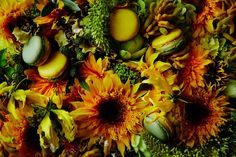 "PIERRE HERMÉ × AZUMA MAKOTO ""2015 Les Jardins"" 【JARDIN DU SOLEIL】"