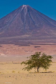 lone tree and  Licancabur, a notable volcano near San Pedro de Atacama, Chile