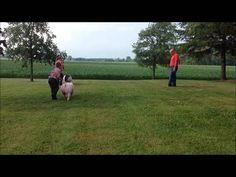 Swine Showmanship Demonstration 2014