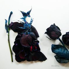 "lovelimzy - ""Maleficent. Made of black dyed rose. I seldom portray specific characters but I think Angelina Jolie looks perfect for the role and I am listening to Lana del rey's Once Upon a Dream while painting this. The horns are made of rose sepals and the wand is a rose stem. The cloak is made of petals. It looks a little puffy on her but I enjoyed doing something different and gothic! And I have learnt how to dye"" - From Instagram"
