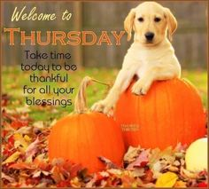 Thursday Greetings, Happy Thursday Quotes, Thursday Humor, Thankful Thursday, Monday Quotes, Morning Qoutes, Morning Memes, Morning Greetings Quotes, Morning Messages