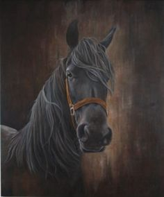 Friesian horse / Friespaard 120x100cm oil on canvas