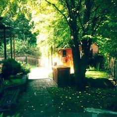 my backyard is amazing in the summer #summerinsurrey #surreybc