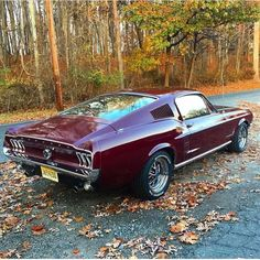 1967 Ford Mustang Fastback, one saved from having an Eleanor kit slapped on. 1967 Mustang, Ford Mustang Fastback, Ford Mustang Boss, Ford Mustangs, Mustang Cobra, Mustang Hatchback, S550 Mustang, Classic Mustang, Ford Classic Cars