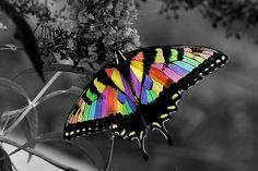 ༺ ʚįɞ Beautiful ༻ :: Flutterby - by Jamie Lee