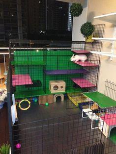 The bunny play house
