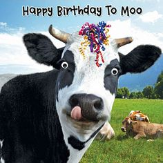 happy birthday cow - Google Search