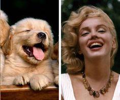 Community Post: The Most Gorgeous Golden Retriever Celebrity Doppelgangers