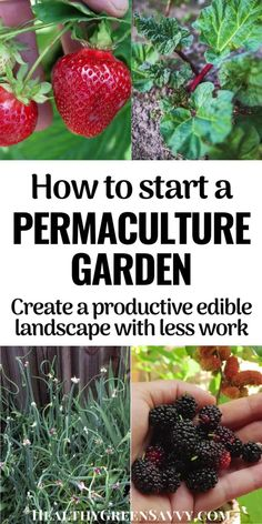 Heard of permaculture but not sure how to use it in your home garden? This beginners' guide to home permaculture will help you apply basic permaculture principles for a more productive garden with less work. #permaculture #garden #ediblelandscaping Permaculture Principles, Permaculture Garden, Permaculture Design, Growing Rhubarb, Growing Herbs, Gardening For Beginners, Gardening Tips, Fruit Trees, Trees To Plant