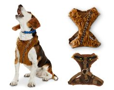 STAR WARS Dog Toys, Collars, and Accessories - Dog Milk