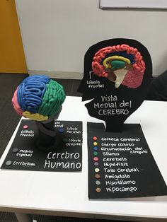 Escultura de massinha sobre o Cérebro Biology Projects, Science Projects For Kids, Science For Kids, School Projects, Medicine Notes, Medicine Student, Brain Models, Science Models, Ap Psych
