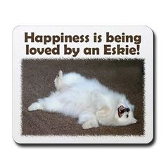 Happiness is being loved by an Eskie :) aka: Paris the Dog!