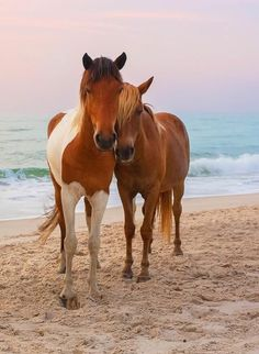 Horse friends snuggle up at the beach.