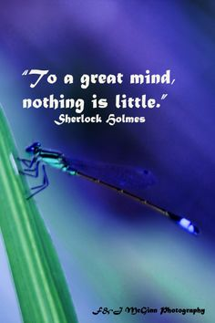 """""""To a great mind, nothing is little."""""""
