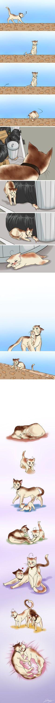 Spamano kitties