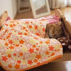 "Gefällt 9,094 Mal, 63 Kommentare - 🌇🔥Cute Funny Cat Compilation🔥🌇 (@kats_are_crazy) auf Instagram: "". . 🌅Sleepy kitty 😻 🌿@amaccho5160🌿 . Via⭐@animals.co⭐ . . ."""