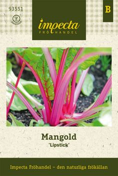 Mangold | Beta vulgaris | 'Lipstick' |