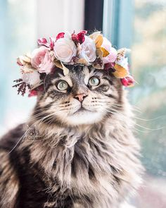 Pictures Of Cute Cats And Kittens Hd any Cute Animals Wallpaper Cartoon; Cute Animals Kissing Pictures with Cute And Funny Animals Pictures I Love Cats, Crazy Cats, Cute Cats, Beautiful Cats, Animals Beautiful, Beautiful Flowers, Animals And Pets, Funny Animals, Cute Animals