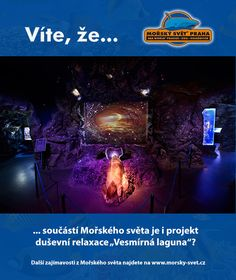 Víte, že... #morskysvet #morskysvetpraha #seaworld #seaworldprague #praha #prague #touristprague #zoo #viteze #ryby #zraloci #koraly #hledasenemo Praha, Sea World, Concert, Concerts