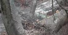 Jan 27, 2017 Hays parents fly to nest, 4:56pm