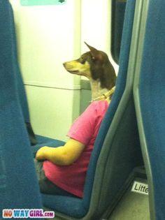 Urlaub mit Hund - auch im Zug sind die Vierbeiner willkommen und machen eine gute Figur :)