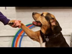 How To Find The Best Dog Training Collar – Trainedog