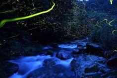 Night Lights: The Breathtaking Nature Photography of Takehito Miyatake - LightBox