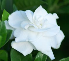 Q: My gardenia is not doing well and I am thinking the soil pH might be the problem. How can I get it tested?