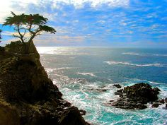 Cypress Point  - Famous lone cypress tree, Pacific coast Monterey California