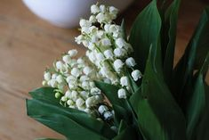 Lily of the valley, gardenista. Lily of the valley is a garden thug. It's great under trees, but don't plant it in beds or if you're near a woodland it might escape into.
