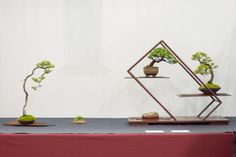 shohin-display-9