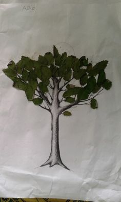 16 Best Gambarkolase2019 Images Seed Art Mosaics For Kids Gallery