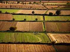 Economy: Economy in the North of Italy is based on agriculture. They grow lots of crops and is one of the biggest wine producers in the world.