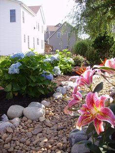 'Endless Summer' Hydrangeas and 'Stargazer' Lilies along the edge of a Dry Riverbed. 'Like' Outdoor Dreams of Facebook and you will have constant access to our entire portfolio of inspired ideas. Additionally, we create new articles every week that are designed to provide our fans with helpful and creative tips for improving their landscapes. http://www.facebook.com/OutdoorDreams