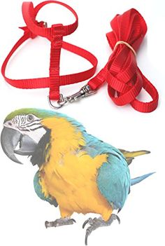 Fred Bird Harness with 6 Foot Leash for Blue and Gold Macaws, Scarlet Macaws, Military Macaws, Greater, Sulpher Crested Cockatoos, Umbrella Cockatoos and birds of similar size - http://www.petsupplyliquidators.com/fred-bird-harness-with-6-foot-leash-for-blue-and-gold-macaws-scarlet-macaws-military-macaws-greater-sulpher-crested-cockatoos-umbrella-cockatoos-and-birds-of-similar-size/