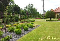 Moja codzienność - ogród Oli - strona 797 - Forum ogrodnicze - Ogrodowisko