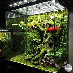 The #terrarium is both an object of #decoration and a #miniature #ecosystem. Original and full of #charm, it allows to #highlight the plants it houses. The particular conditions of culture (#humidity, #restricted space, #rare substrate) however imply some precautions. Terrarium Reptile, Aquarium Terrarium, Terrarium Plants, Orchid Terrarium, Crested Gecko Vivarium, Crested Gecko Habitat, Chameleon Enclosure, Reptile Enclosure, Reptile Cage