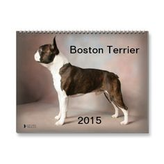 Boston Terrier 2015 Calendar | Zazzle