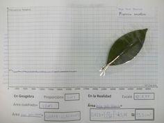 Viendo como se estabiliza la proporción(frecuencia relativa) en los dardos aleatorios de la hoja de Palo Blanco Darts, Blade, White People