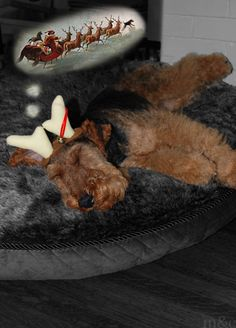 'Twas the Night Before Christmas Doggie Dream www.milesandemma.com